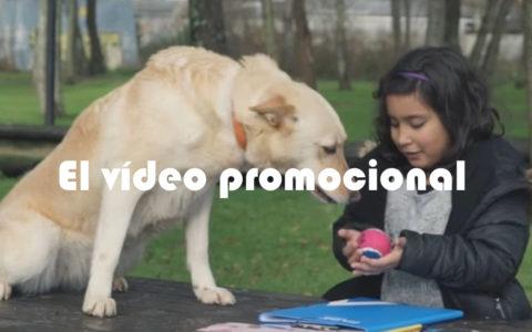 Anuncio publicitario sobre mascotas: Cómo se hace una campaña.