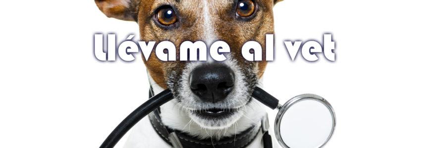 marketing a veterinarios