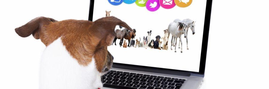 Taller de redes sociales: facebook